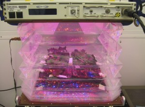 Veggie plant growth chamber